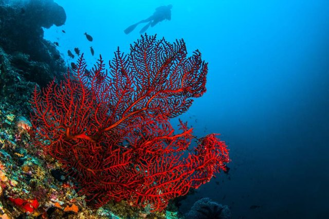 What Are the Healing Qualities of Red Coral?
