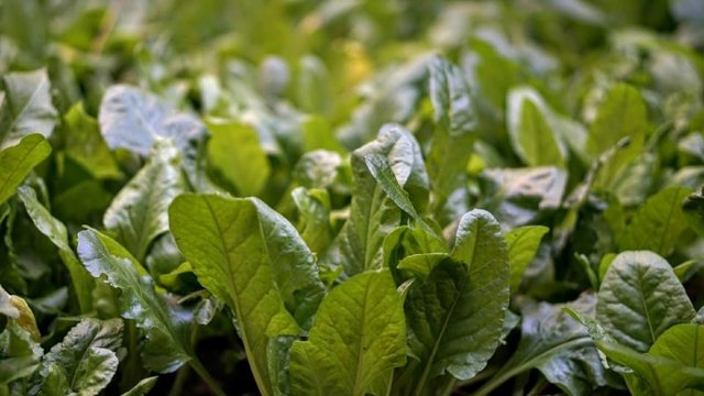 Can Spinach Thin Your Blood?
