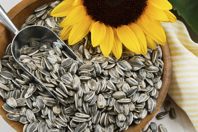 Bowl of sunflower seeds and sunflower