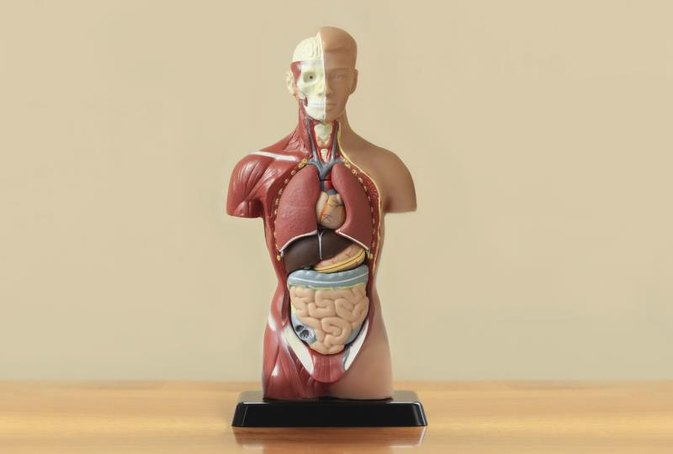 Five Organs That Secrete Digestive Juices