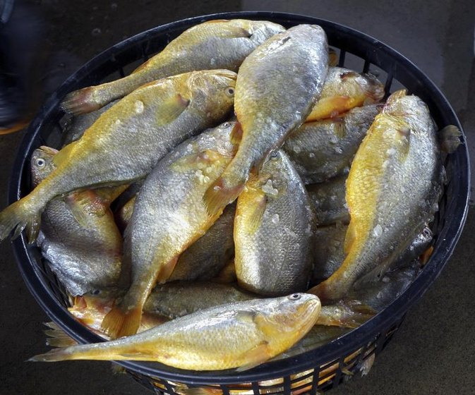 How to cook croaker fish livestrong com for What is a croaker fish