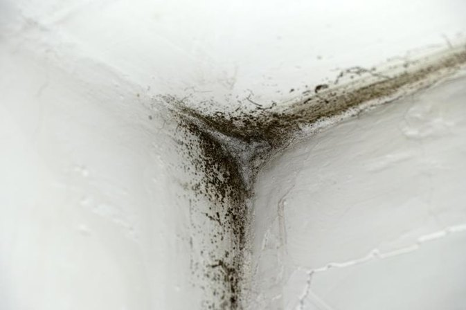 Diseases Caused by Black Toxic Mold