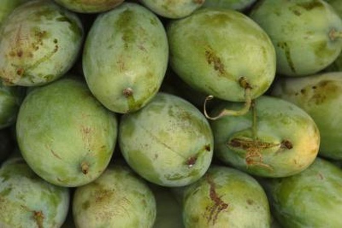Glycemic Load of Green Mangoes