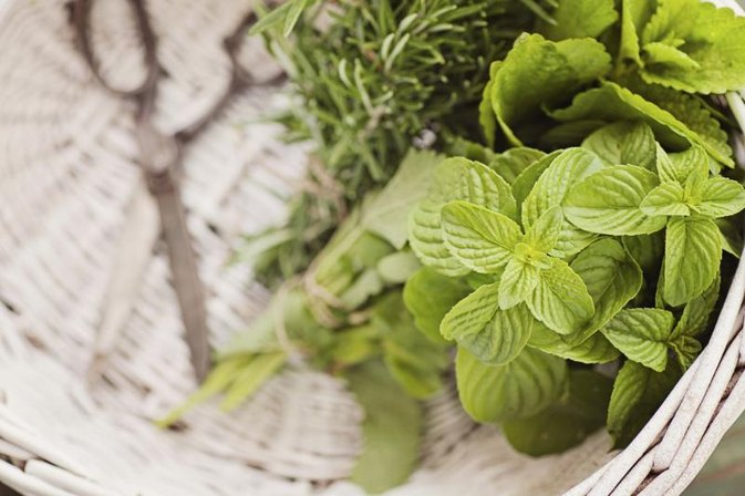 Herbs That Clean the Lungs