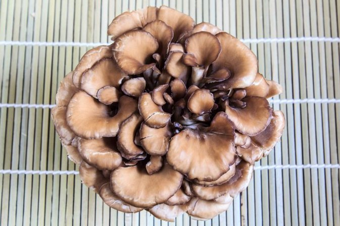 What Are the Benefits of Maitake Mushroom Extract?