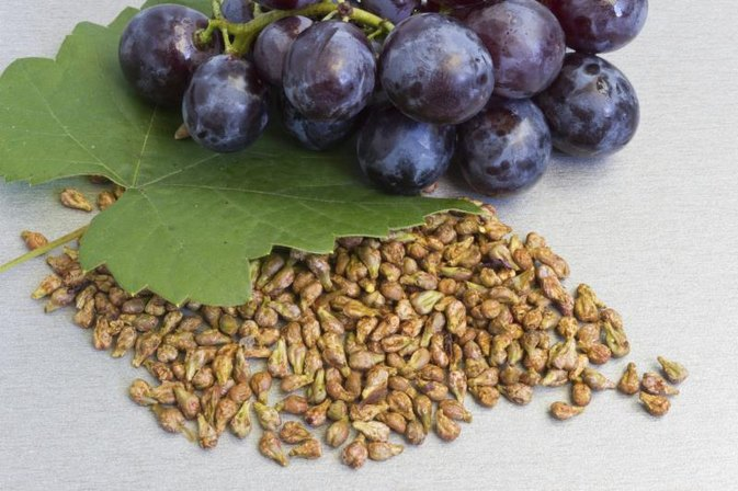 Is Grape Seed Extract Safe or Toxic?