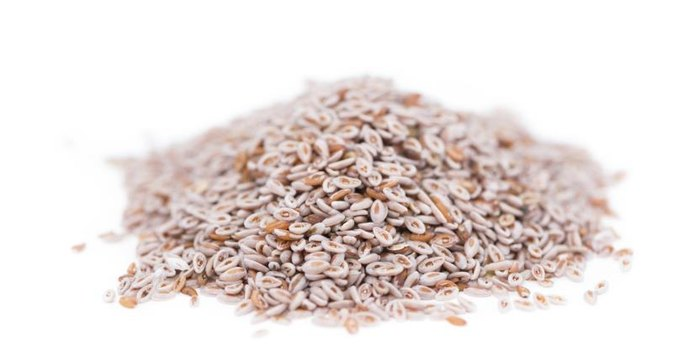 Are Psyllium Husks Prebiotic?