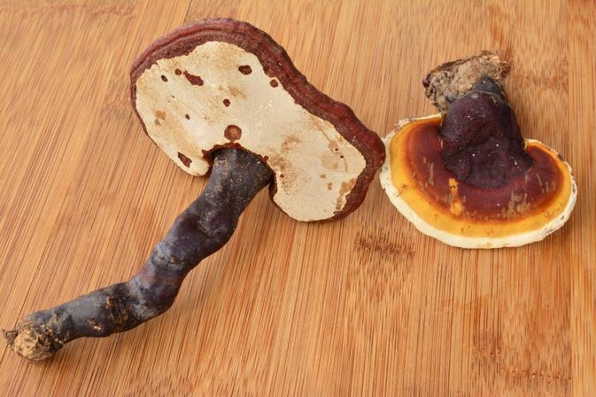 What Are the Health Benefits of Ganoderma Lucidum?