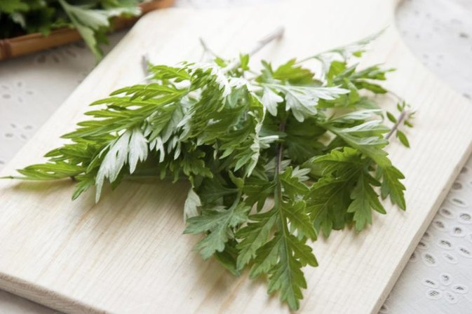 What are the Side Effects of the Wormwood Herb