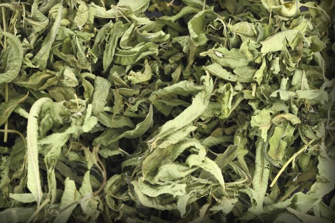 Health Benefits of Lemon Verbena