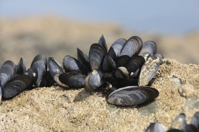 How to Use Mussels As Fishing Bait