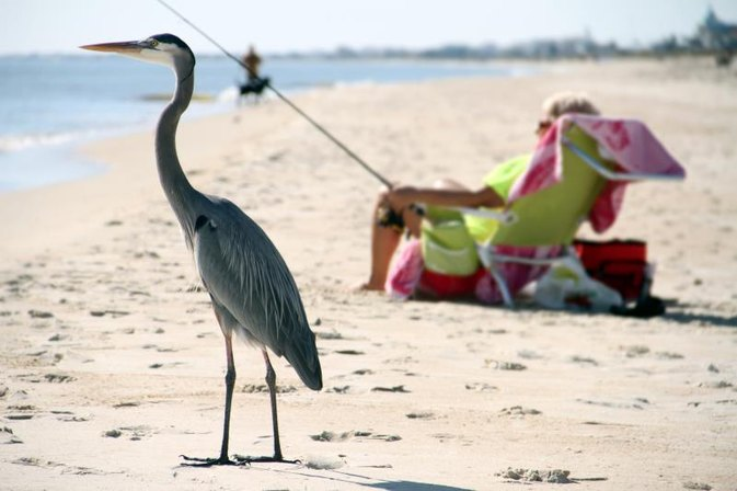 Shore-Fishing on St. George Island, Florida