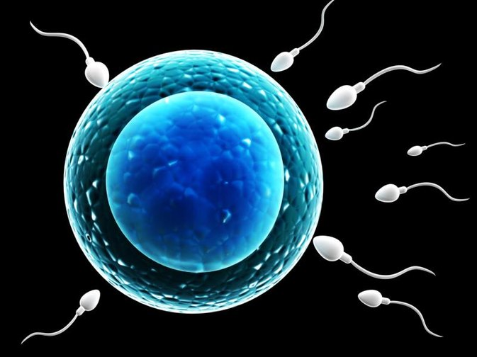 How Is Sperm Collected?