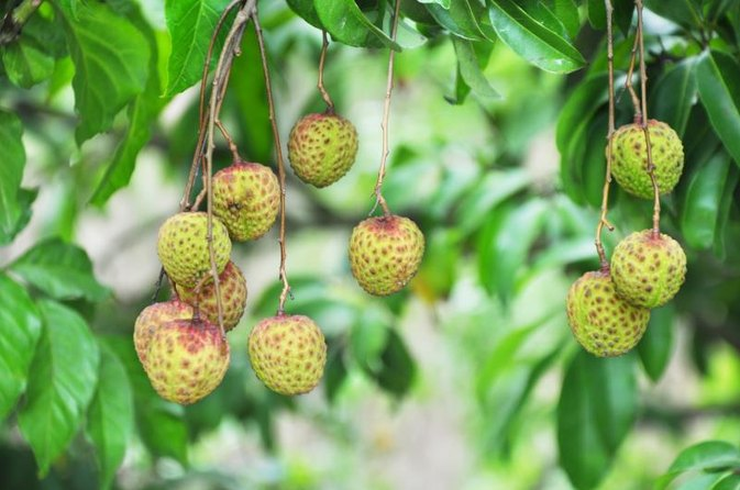 Calories in Lychee Fruit