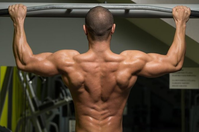 Are Pullups or Rows Better for Back Width?