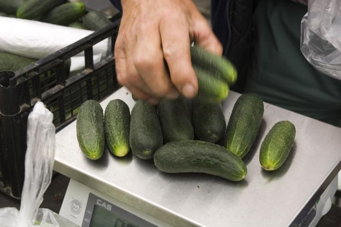 The Nutrition of Seedless Baby Cucumbers