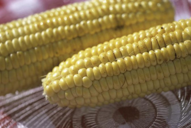 Does Corn on the Cob Provide All of the Essential Amino Acids?