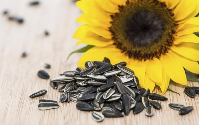 Calories in Shelled Sunflower Seeds
