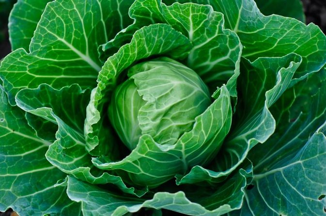 Cabbage & Vitamin K