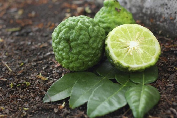 What Are the Benefits of Bergamot Essence?