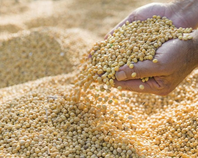 Is Soy Safe When Pregnant?