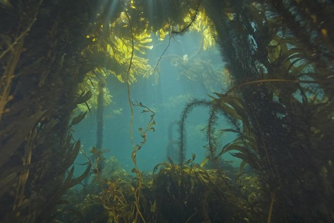 Taking Sea Kelp Supplements