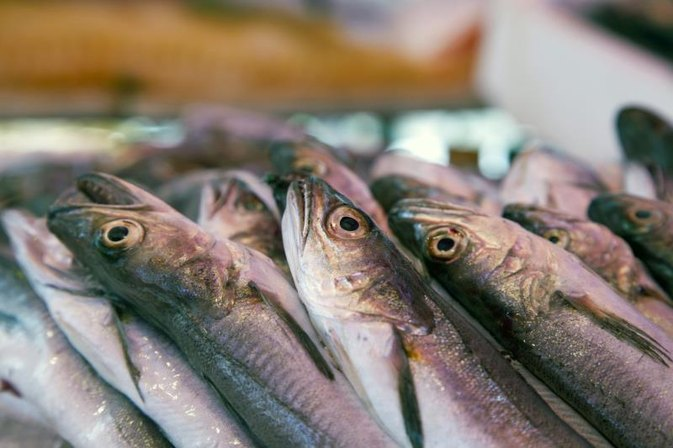 tips on using sardines as bait for fishing | livestrong, Fishing Bait
