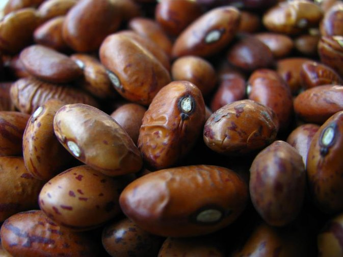 Are Kidney Beans Fattening?