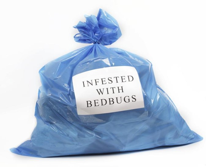 How to Get Rid of Bed Bugs Yourself