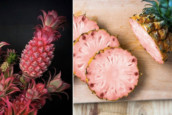 Pink Pineapples May Be the New Unicorn Food, But What Are They?!