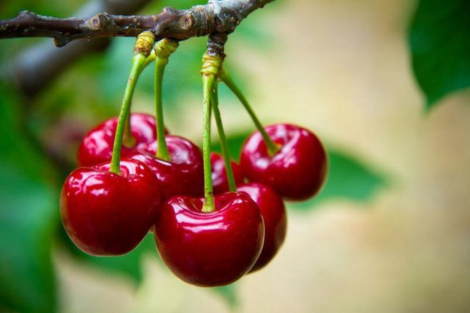 Cherry Fruit Nutrition