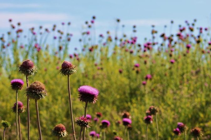 Side Effects of Thisilyn Milk Thistle