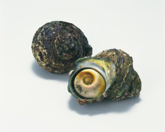 How to Cook Periwinkles