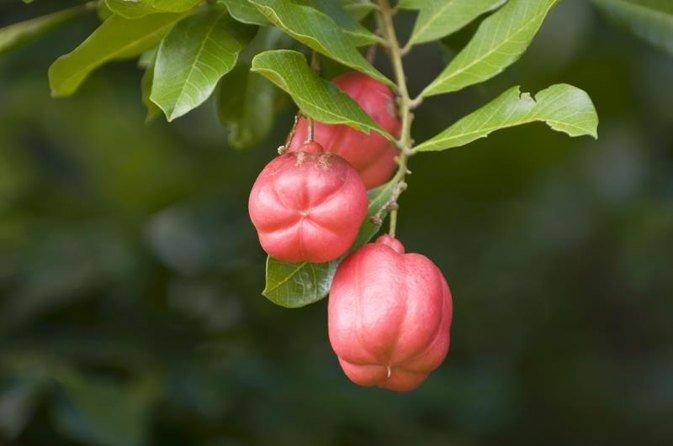 Ackee Nutrition Information