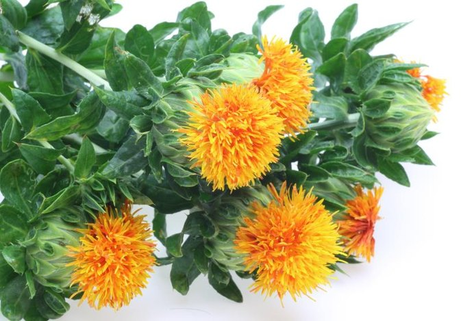 Is Safflower Seed Oil Safe During Pregnancy?