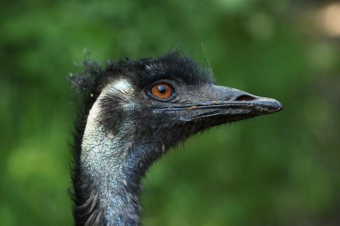 The Side Effects of Emu Oil