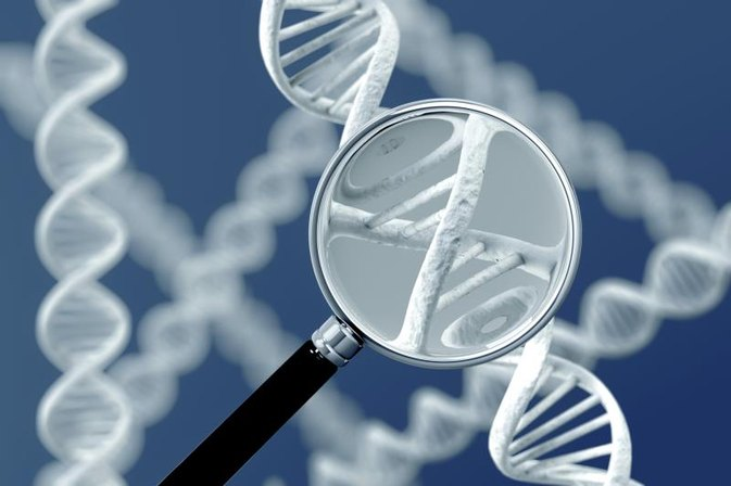 The Uses of Restriction Enzymes