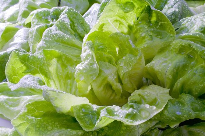 Is It Unhealthy to Eat Old Lettuce?