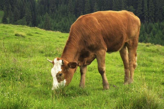 Nutrition of Grass-Fed Beef vs. Corn-Fed Beef
