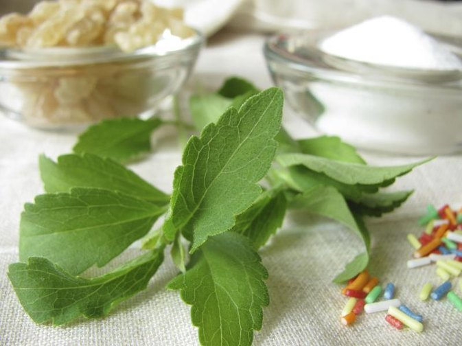 Benefits and Dangers of Stevia