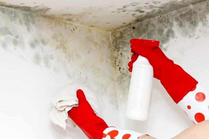 Health Problems Caused by Mold
