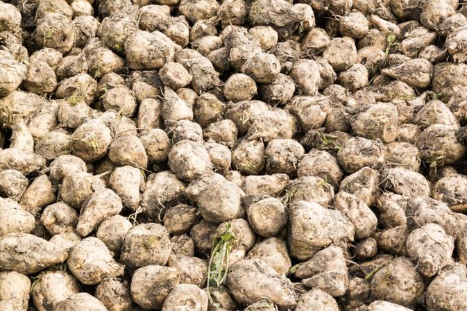 Nutritional Content of Sugar Beets