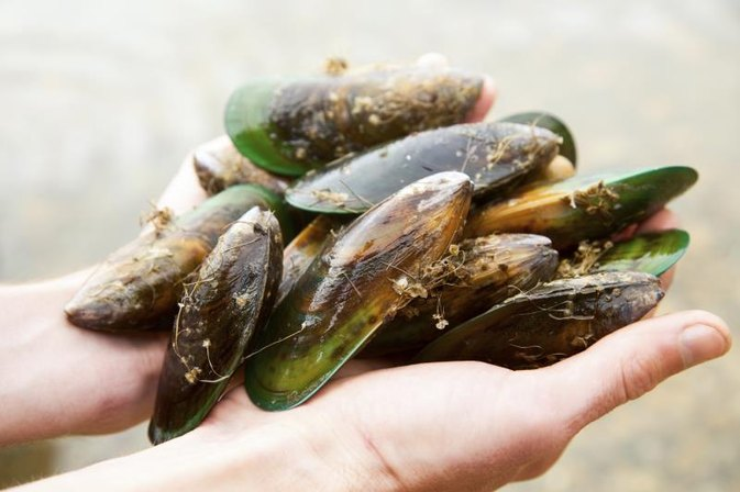 How to Cook New Zealand Green Mussels