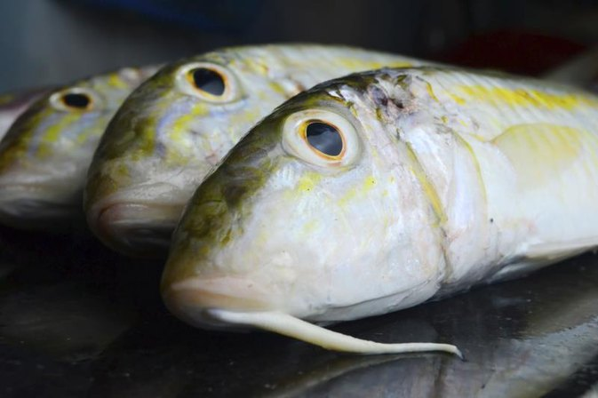 How to Cook Garfish