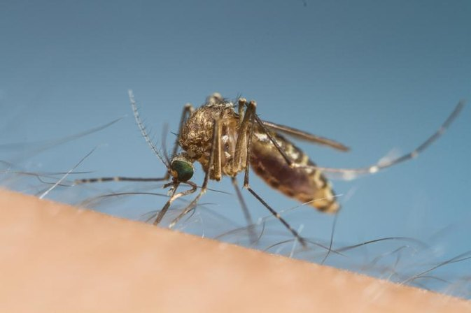 How to Diagnose Dengue Fever With Lab Tests