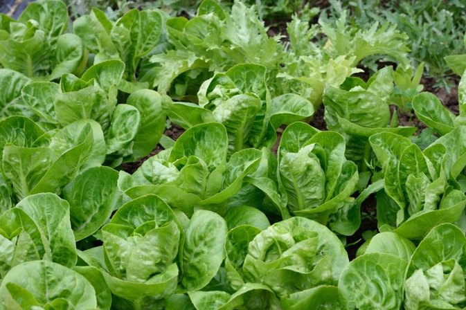 What Are the Benefits of Supergreens?
