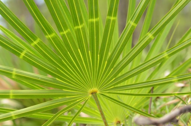 How Much Saw Palmetto Should I Take a Day?