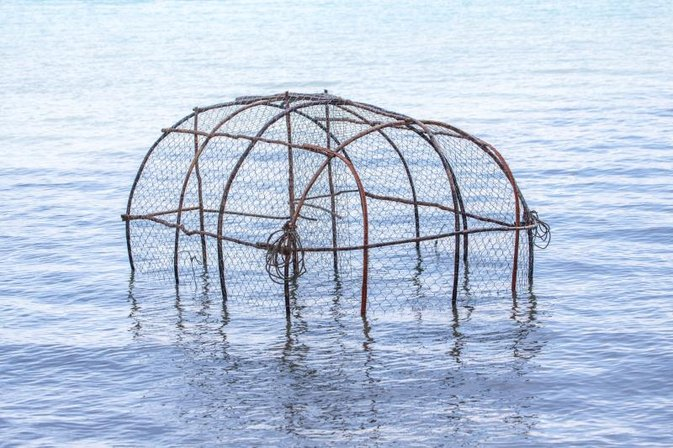 How to Catch Shrimp in Traps with Bait