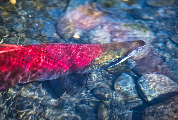 Best Lures for Salmon Fishing