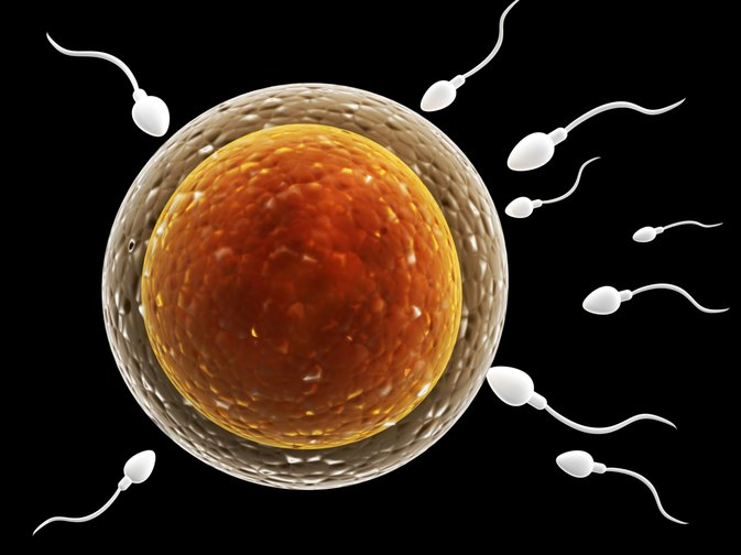 Vitamins in Sperm